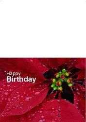 happy-birthday-01