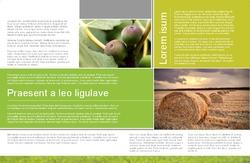 Brochure-13